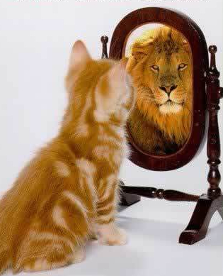 Cat looking in a mirror, seeing a lion.
